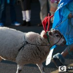 Community Parade 2014
